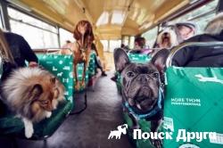 В Лондоне открыли туристический маршрут для собак