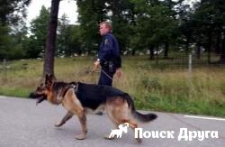 Швеция потратила 1 млн евро на покупку собак для армии