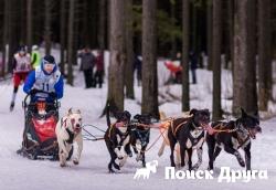 В Карелии прошли гонки на собаках «По земле Сампо»