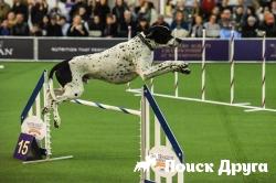 В Нью-Йорке стартовала традиционная выставка собак