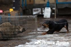 ГД запретит контактную притравку собак