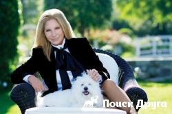 Барбара Стрейзанд клонировала любимую собаку