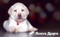 Раскрыт феномен собачьего зрения