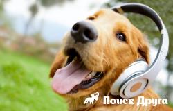 В Германии создали радио для собак