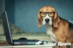 Американские компании начали страховать собак