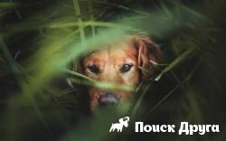 Собаки будут помогать искать редкие виды животных