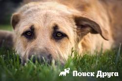 В Северной Америке нашли останки собак старше 10 тысяч лет