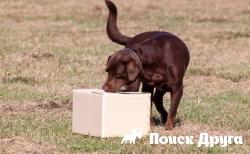В США собаки будут искать артефакты
