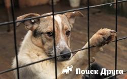 В Москве состоялась выставка собак из приютов