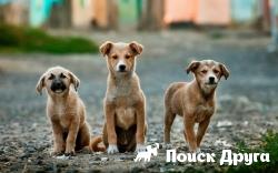 Собаки имеют несколько видов памяти