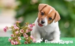 Ученые определили «милый» возраст щенков