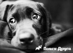 Установлено что собаки умеют ревновать