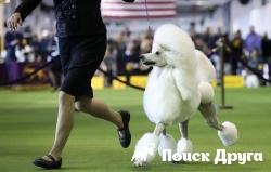 В Европе прошел фестиваль собак