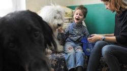 Собак научат определять шизофрению